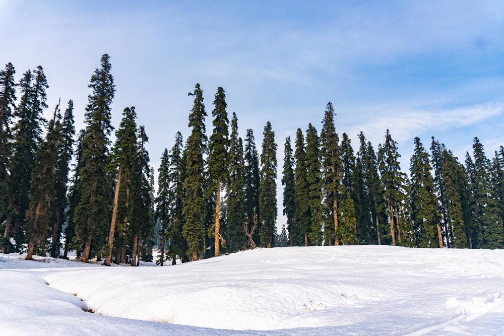 Gulmarg-Submission-4.jpg