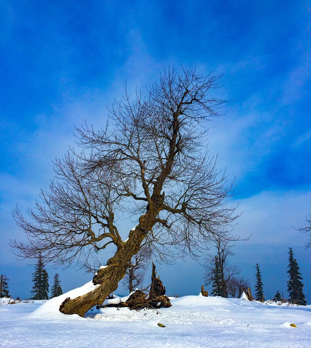 Gulmarg-Submission-20.jpg