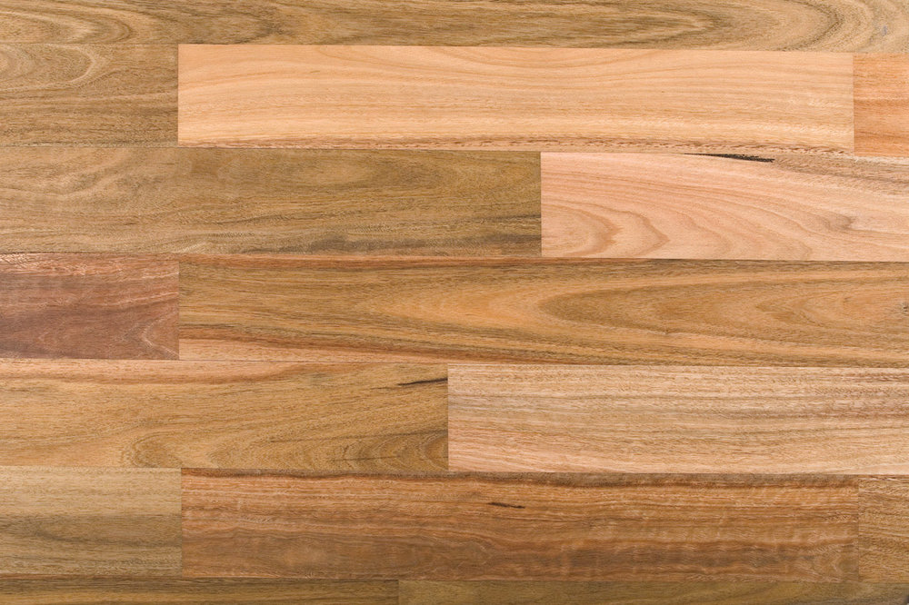 Spotted Gum - BAL 29