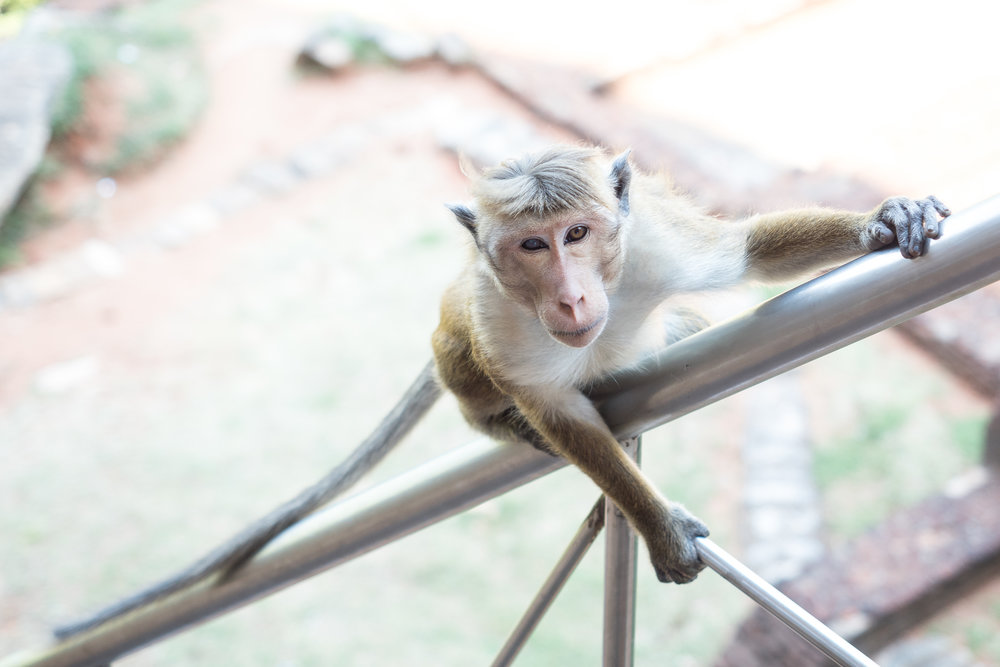 Sri Lanka, flickr (16 of 36).jpg
