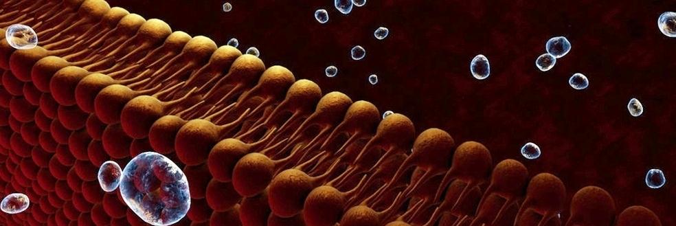 cell membrane_10cm(1).jpg