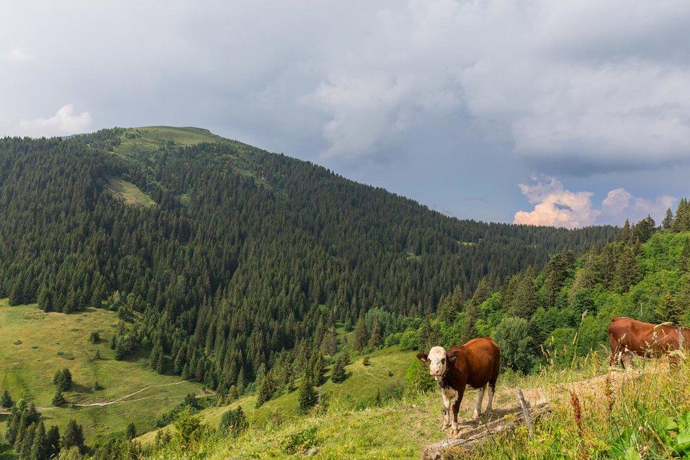 Chalet Alpage Summer - Reportage Photo - Victor Perez - Atelier VE-2.jpg