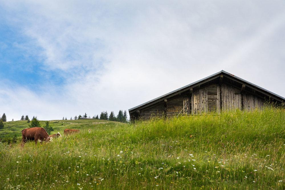 Chalet Alpage Summer - Reportage Photo - Victor Perez - Atelier VE-6.jpg