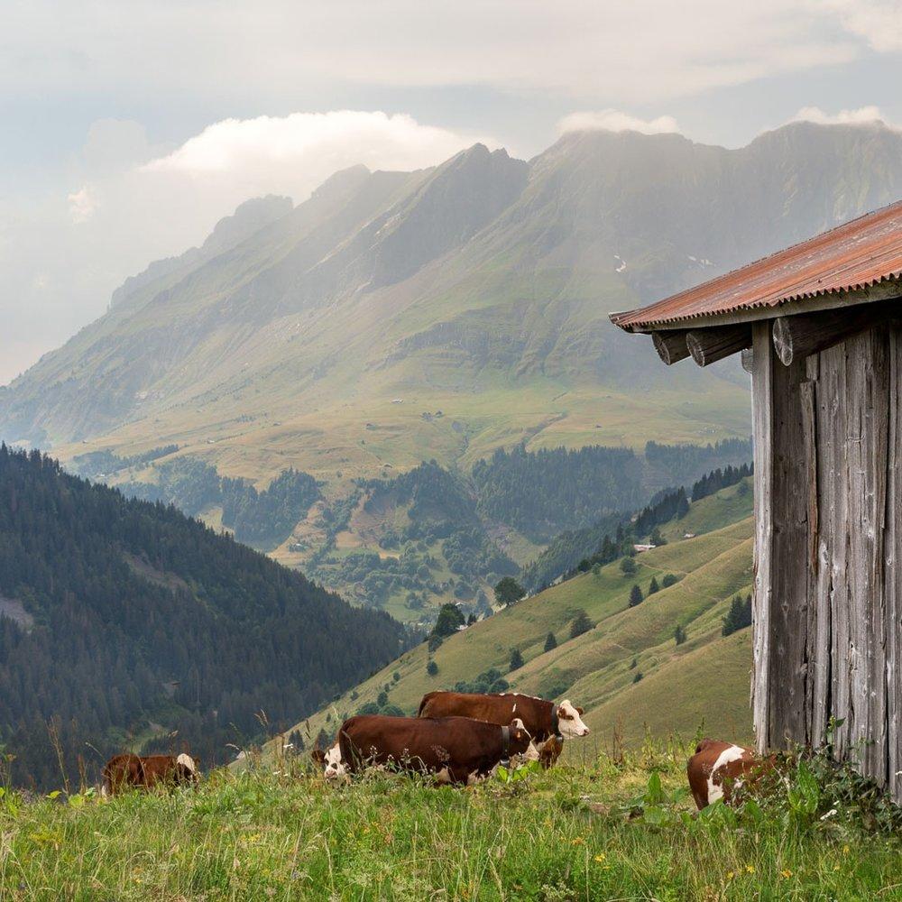 Chalet Alpage - Summer..Chalet Alpage - Ete