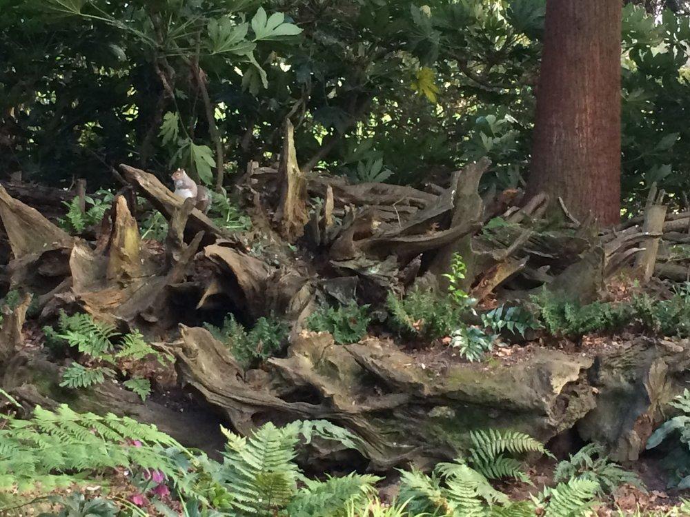 Golders Hill Stumpery
