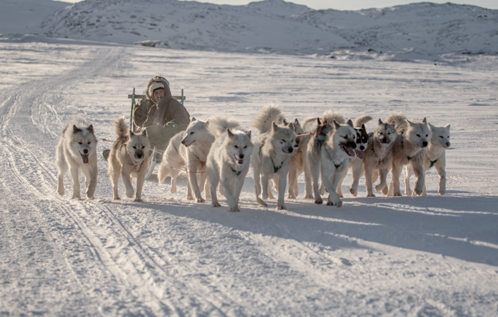 Sled Dogs outside Ilulissat, photo by Mads Pihl