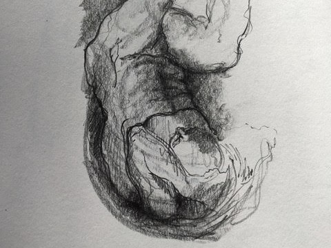 Anna Gillespie, observation drawing after Michelangelo, 2019