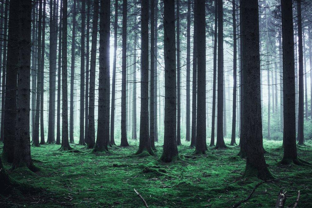 forest-2841670.jpg