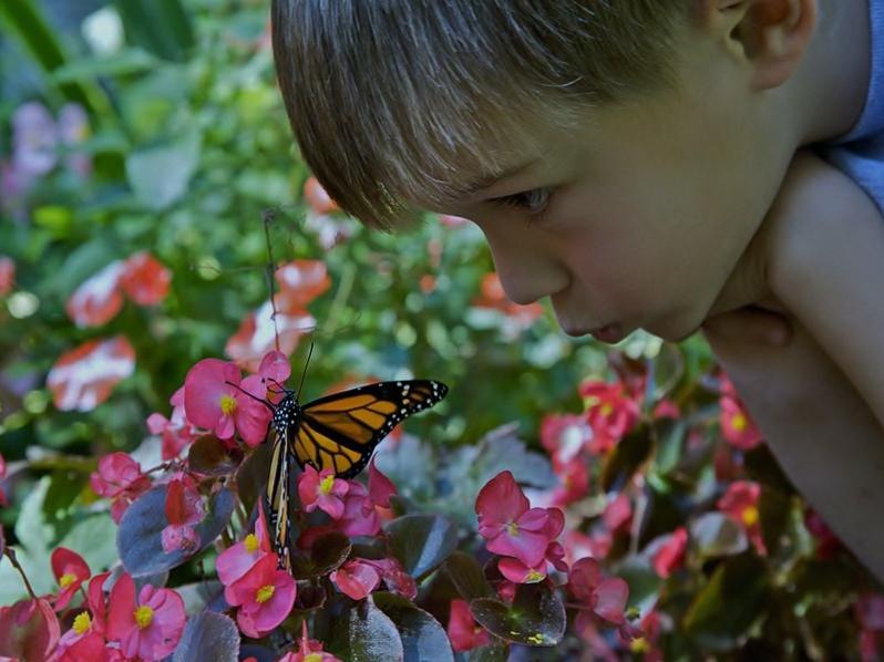 boy with monarch (2).jpg