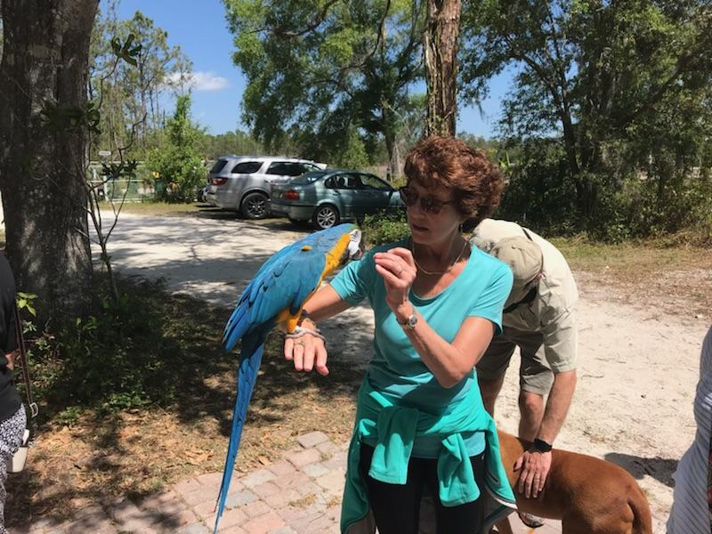 Animal reiki for a parrot
