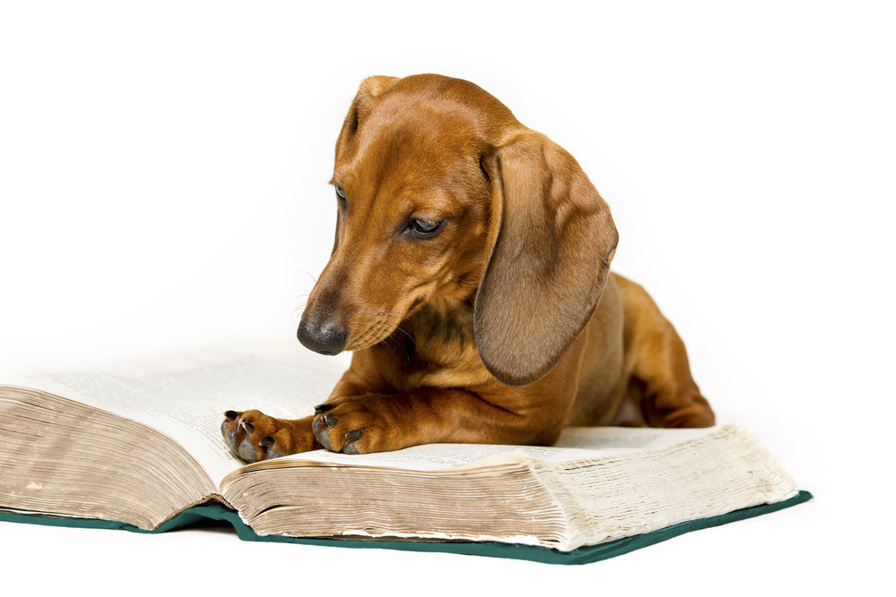 Dachsund Reading Book.jpg