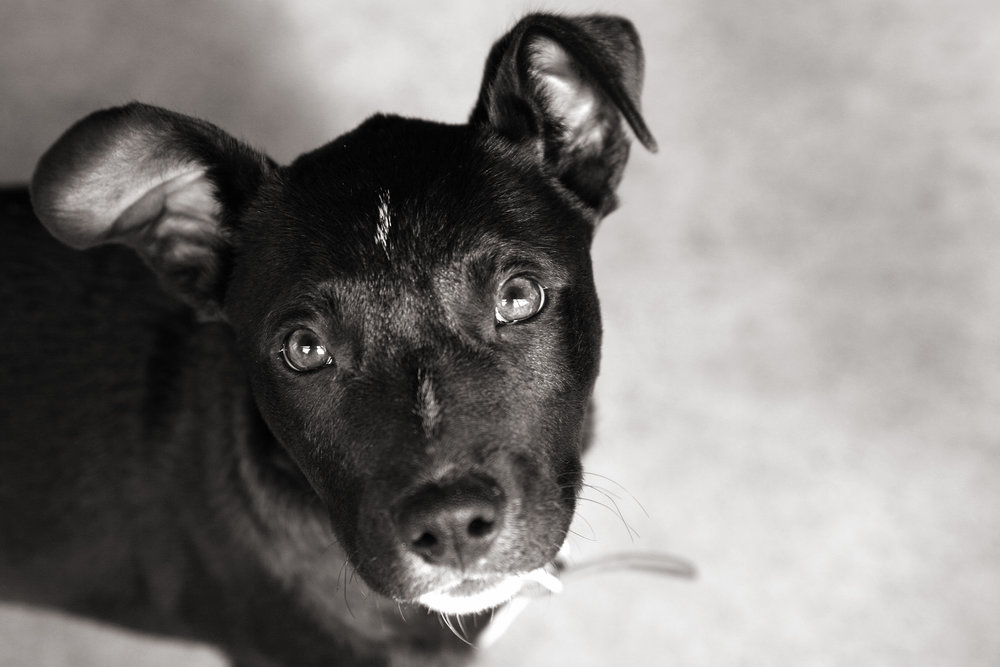 Small Pup Close Up Black and White.jpg