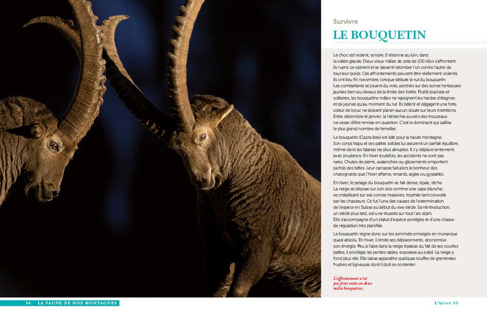 faune des montagnes-15.jpg
