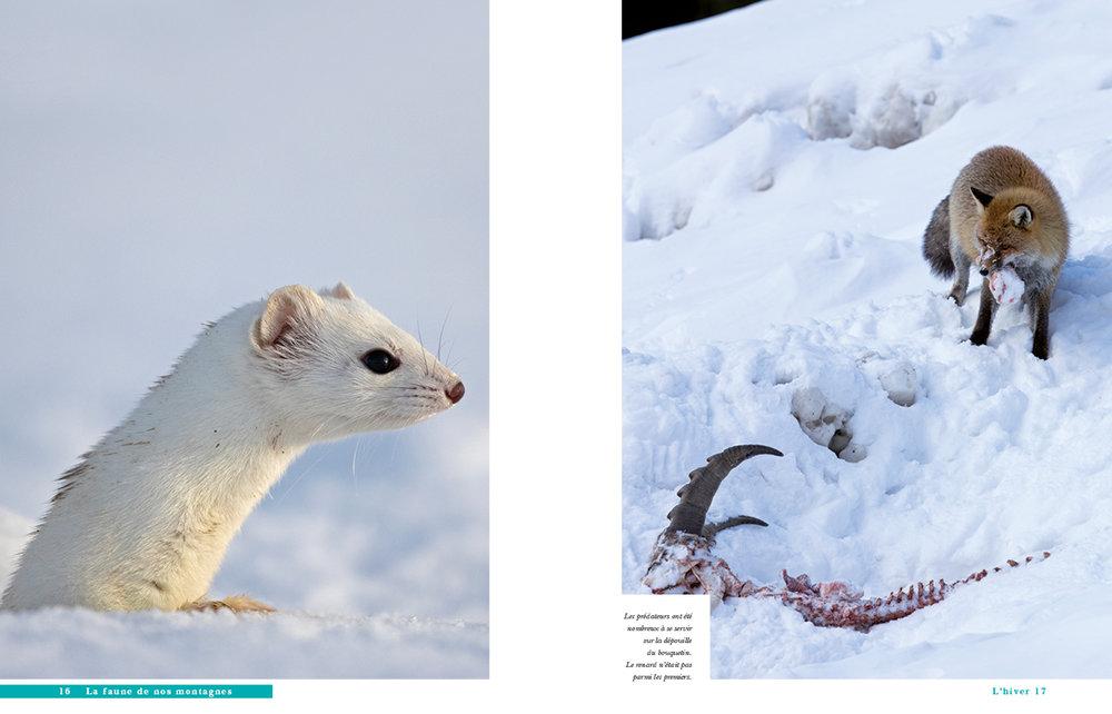 faune des montagnes-6.jpg