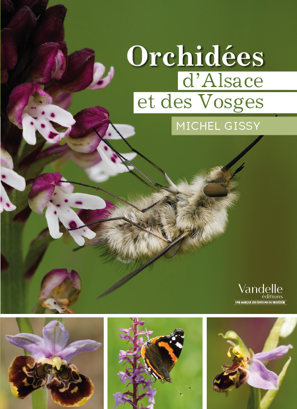 Orchidees-Alsace.jpg