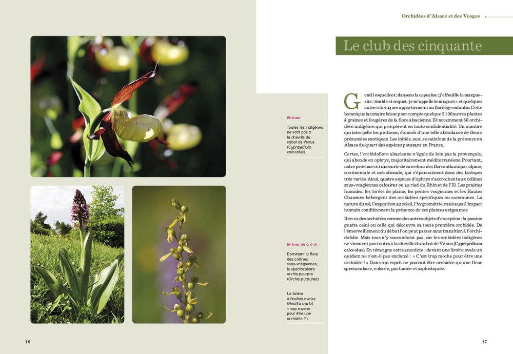 ORCHIDEES32.jpg