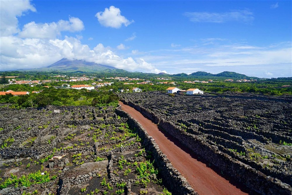 Photo: The vineyards of Pico enclosed by dry-stone walls made of black basalt © James Kay / Lonely Planet