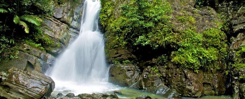 El Yunque National Forest  Photo Credit: carabalirainforestpark.com