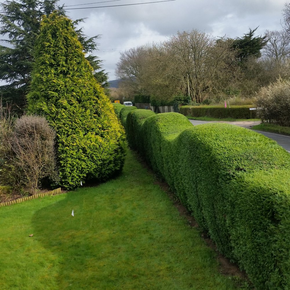 Hedge Trimming -