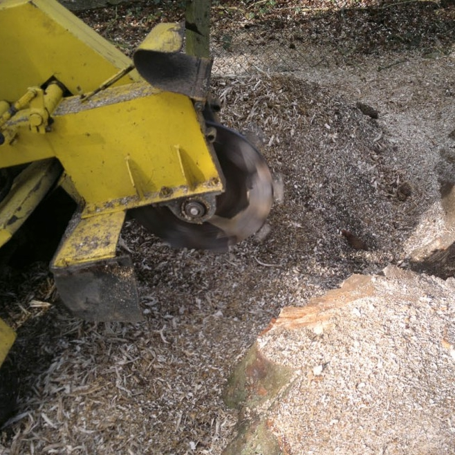 Stump Grinding -