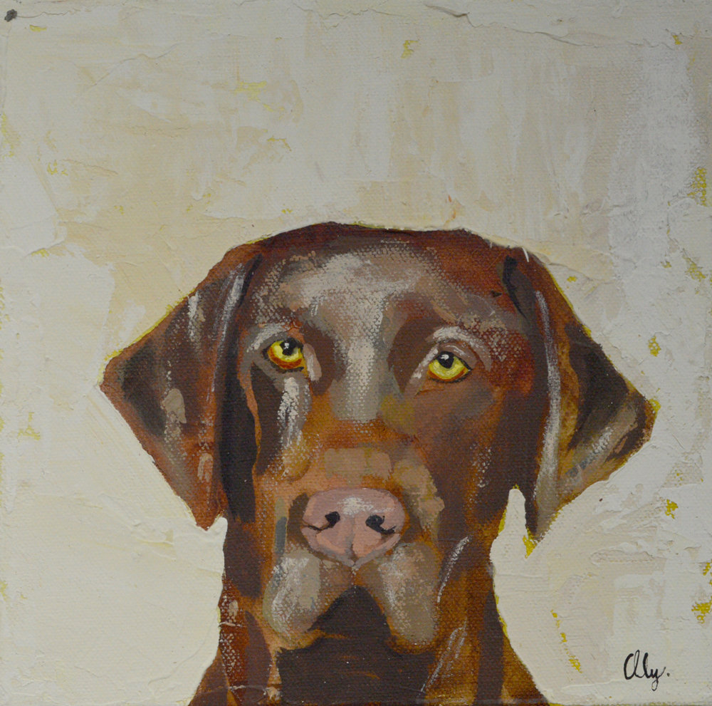 Chocolate Labrador 8x8
