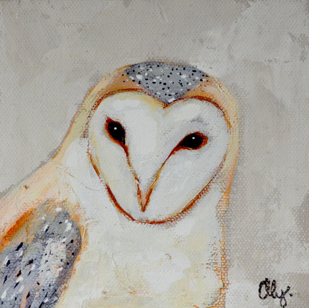 Barn Owl 6x6