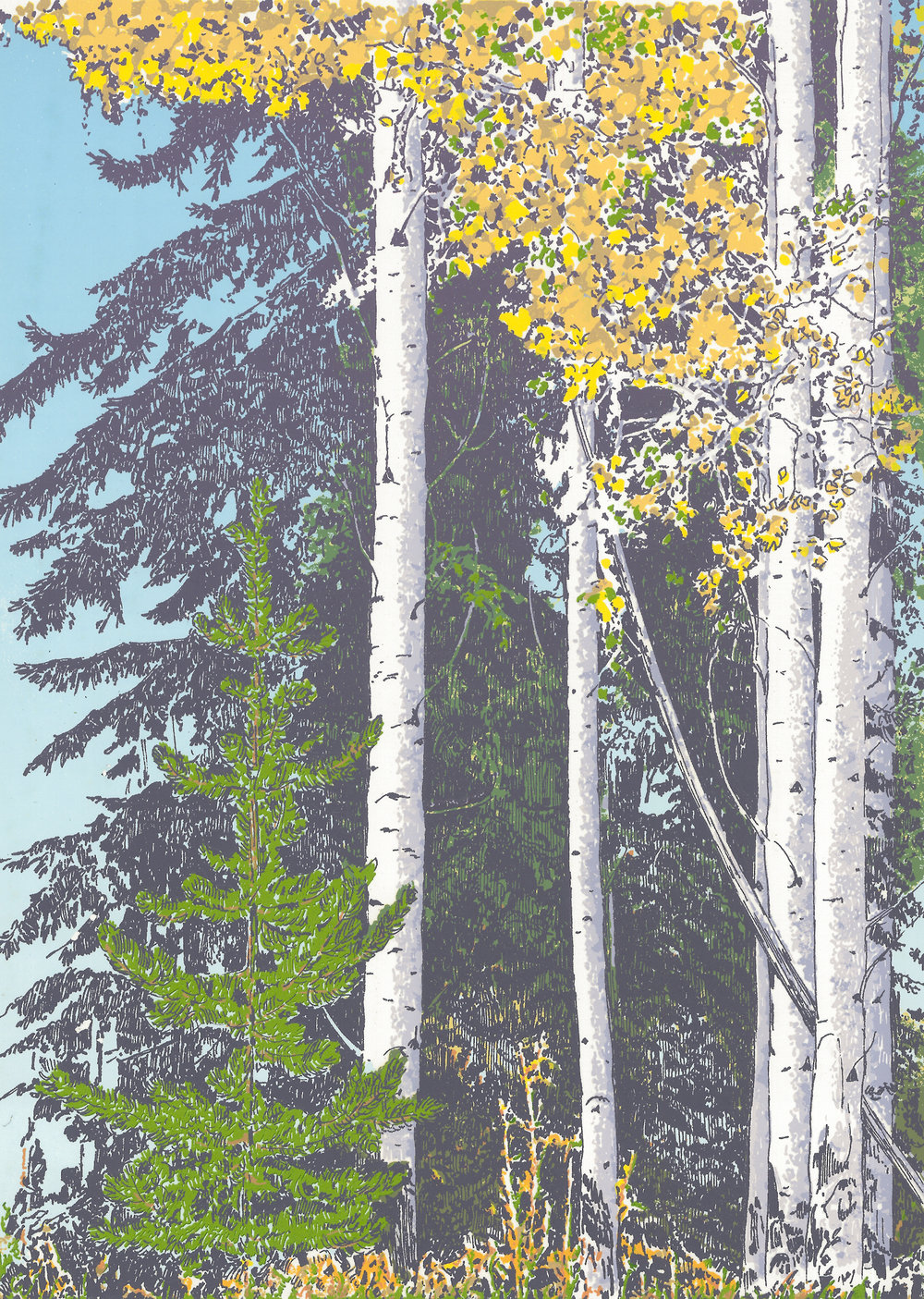 "183   Fall Beeches 1   12"" x 9"" – 356 x 254mm 14 colors 40 edition / 18 available $325 each"