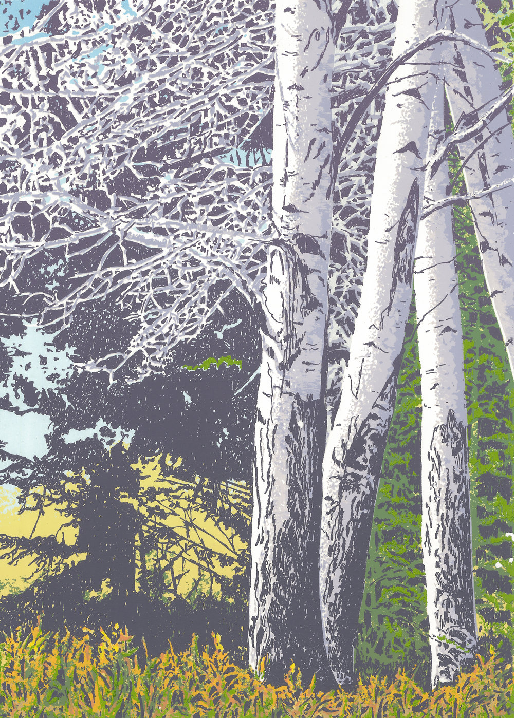 "182   Fall Beeches 2   12 x 9"" – 356 x 254mm 14 colors 40 edition / 18 available $325 each"