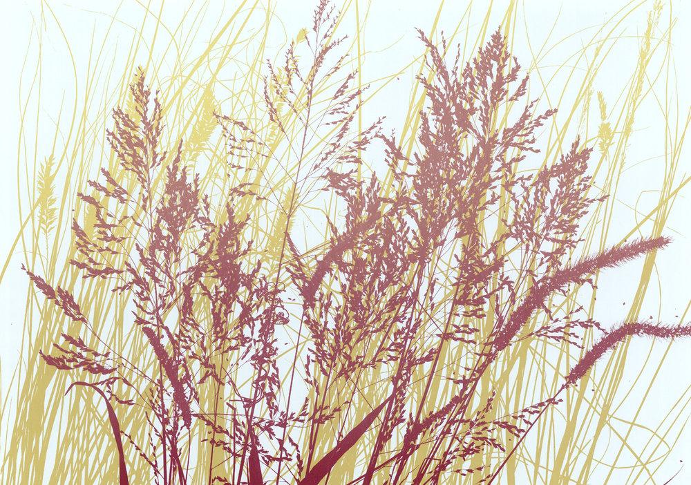 Helen's Grass