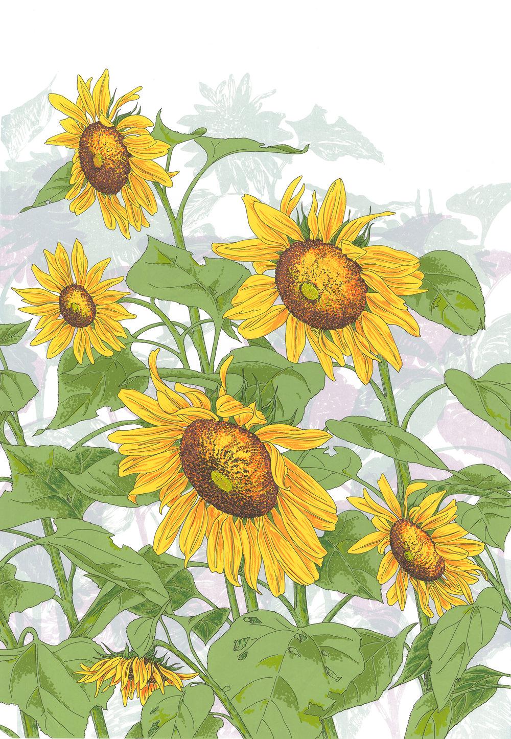 Sunflowers 3