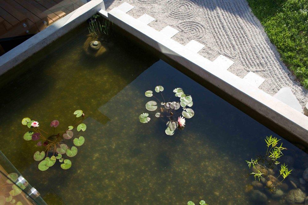 bio pond.jpg
