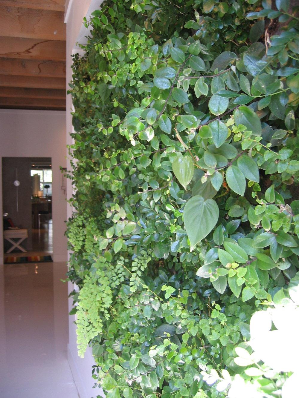MUBI GSL indoor Sept 08.JPG