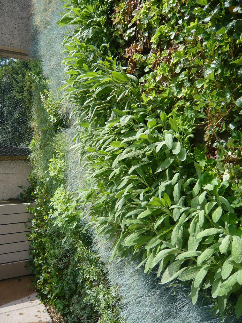 MUBI vertiscape herbs1.jpg
