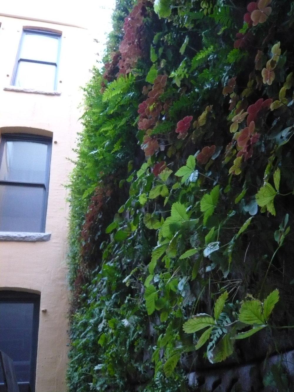 MUBI RP wall.JPG