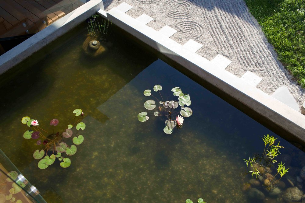 Mindful-Homes-Bio-pond.jpg