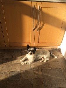 Sunbathing in Mossley 30.09.2015
