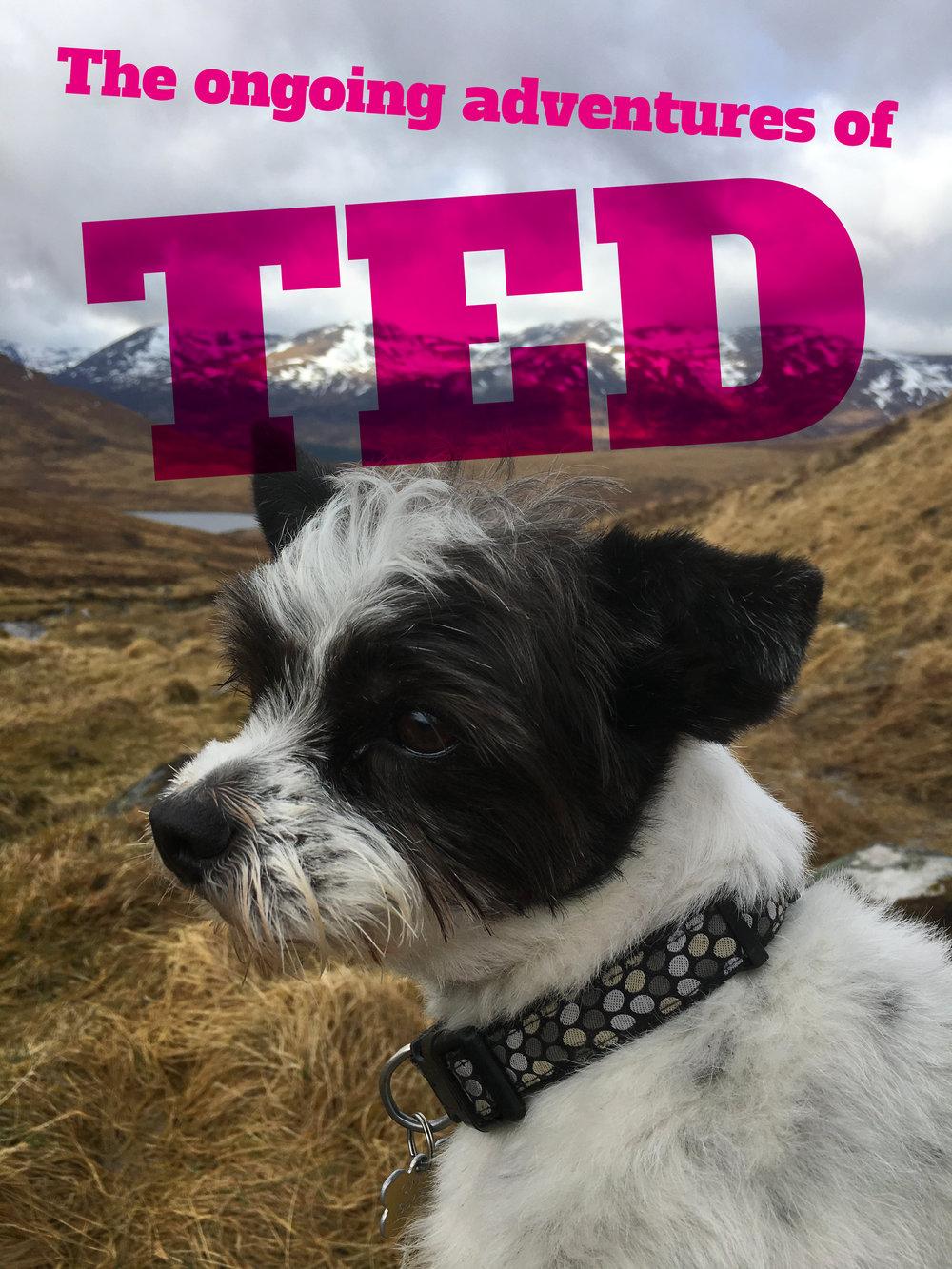 ted_header.jpg