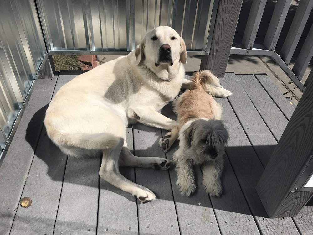 Boomer and Pickles, Dr. Jenny's companions