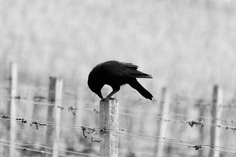 Photo by   Hannes Wolf, Unsplash