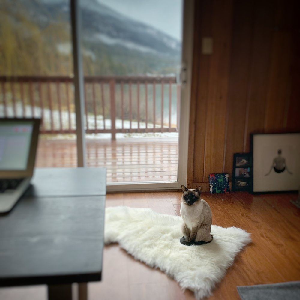 Cabin life and home office (The rug is her xmas present.)