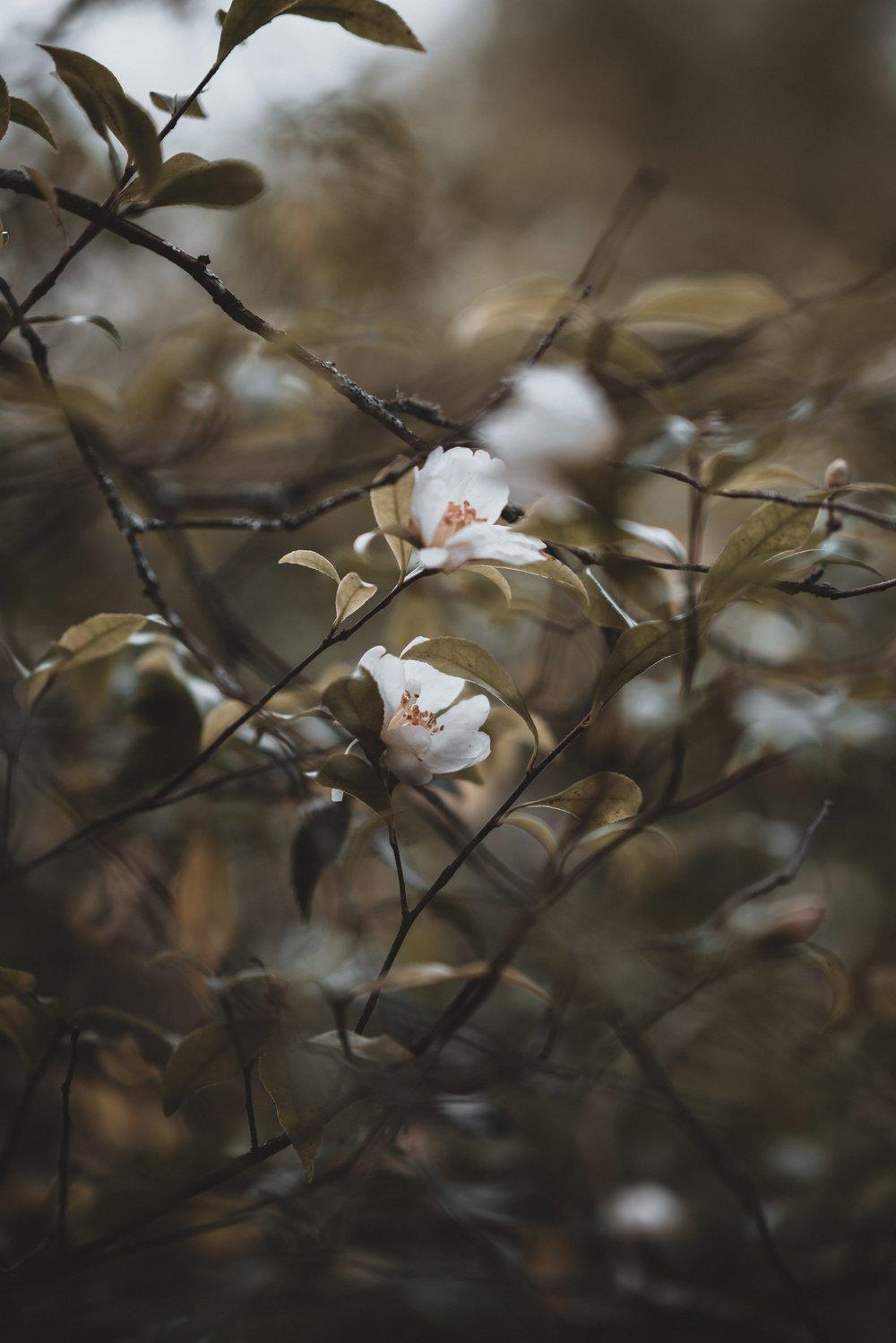 Photo by Annie Spratt,   Unsplash