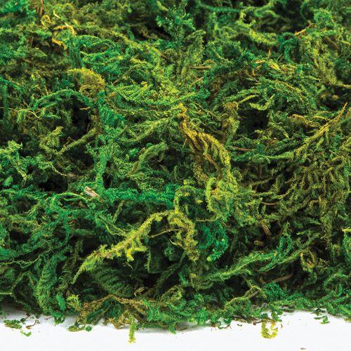 Green Florist Moss