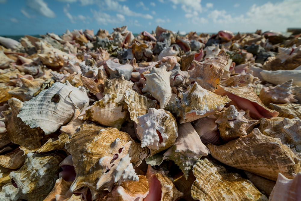Conch Shell Graveyard