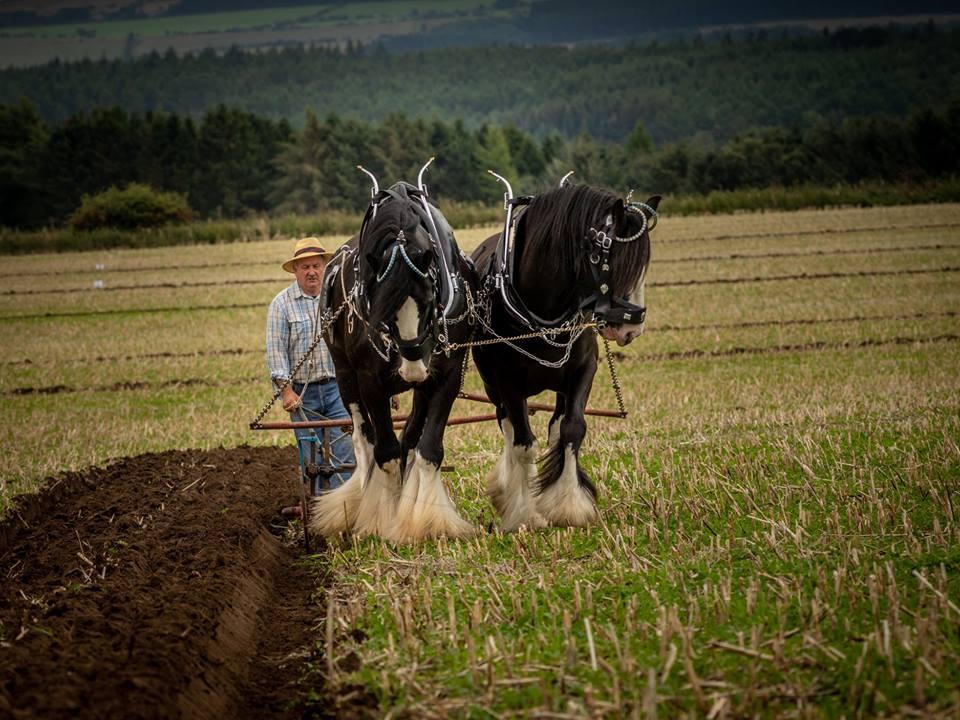 horse-ploughing.jpg