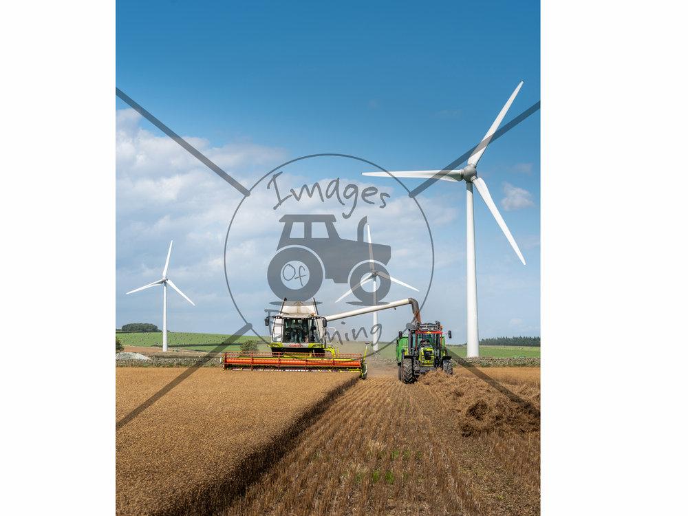 harvesting-linseed.jpg