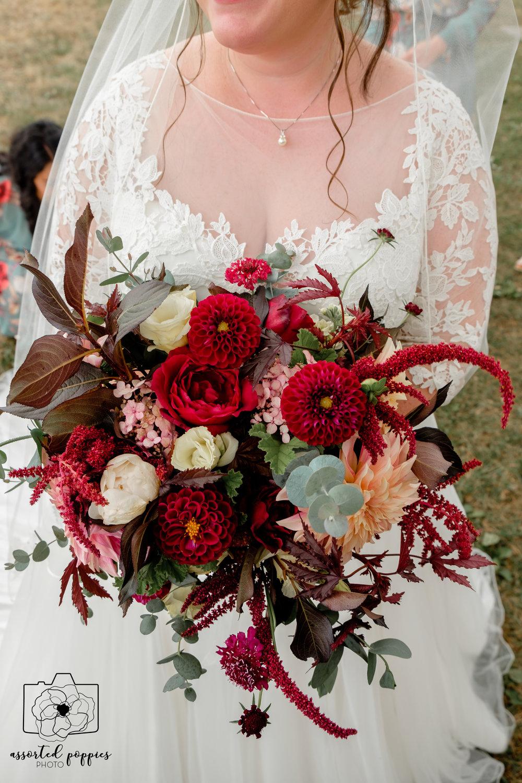Photo: Assorted Poppies Photo