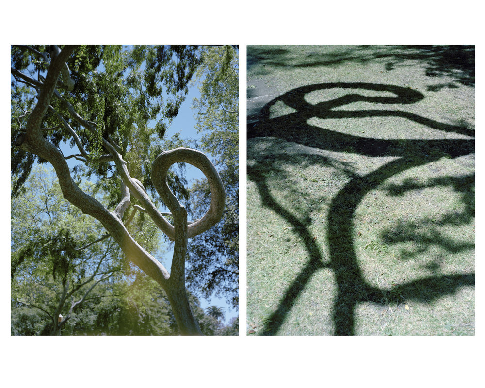 Twin_Trees.jpg