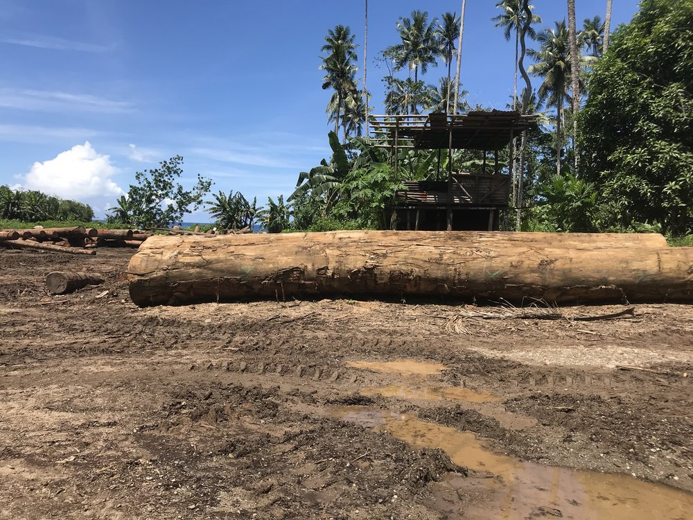 Heartbreaking: large swaths of PNG's pristine tropical rainforests are being razed - mostly by Chinese companies. And many locals are not happy…