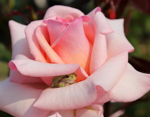 frog-flower.jpg
