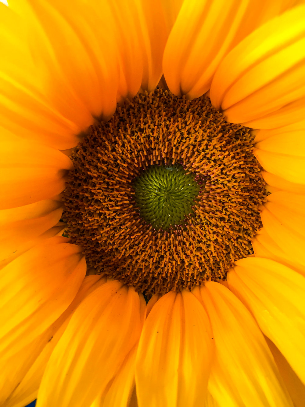 sunflowerswings.jpg